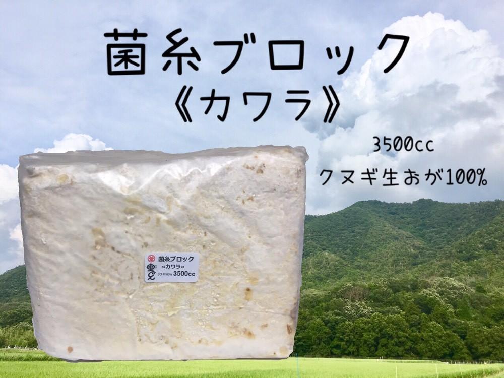画像1: 菌糸ブロック≪カワラ≫ (1)
